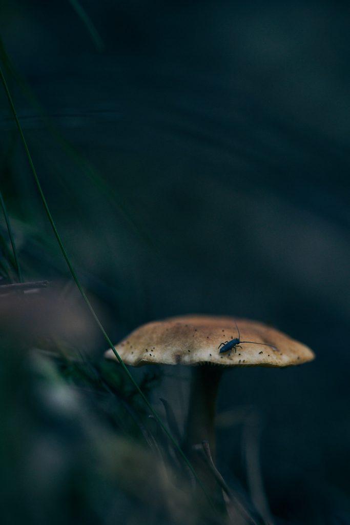 Dyster svamp