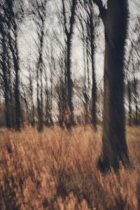 Naturfoto Stress
