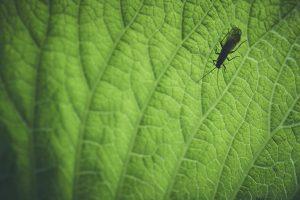 Insekt Siluet