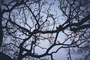 Egern Siluet